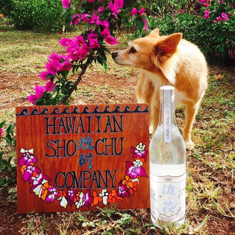 ハワイアン焼酎カンパニー「波花」$40<br /> 写真提供: ハワイアン焼酎カンパニー