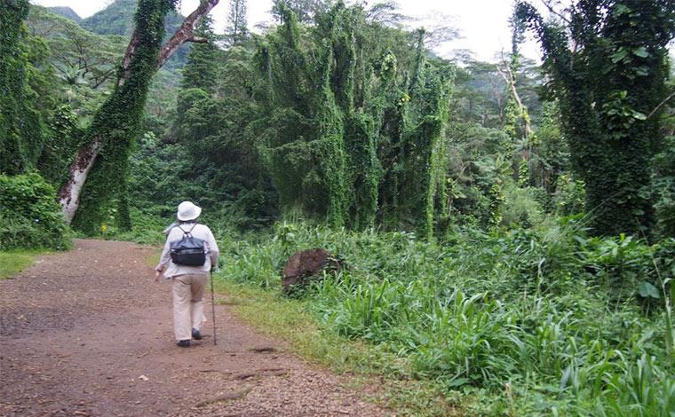 マノア滝までのコースはほぼ平坦な道のり。うっそうと茂る木々の間から鳥たちのさえずりが聴こえてきます