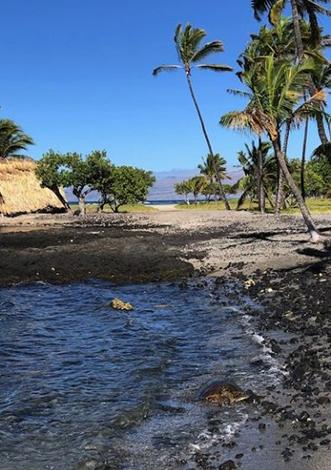 マウナラニの海岸線でHonu(亀)に遭遇