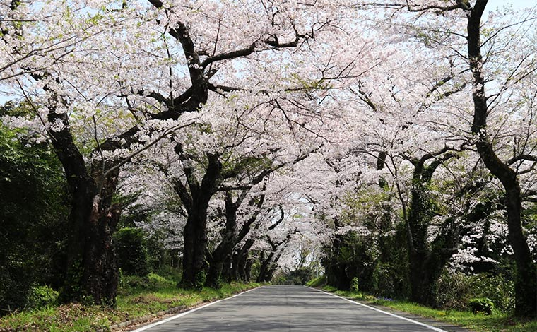 写真提供:小田原市観光協会