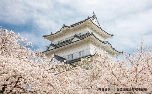 春満開。写真で巡る、桜を愛でる小田原旅行