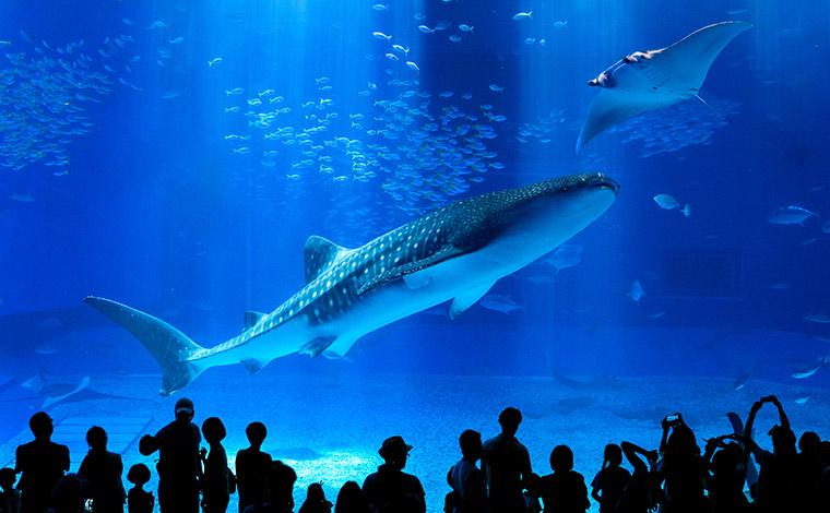 写真提供:国営沖縄記念公園(海洋博公園):沖縄美ら海水族館