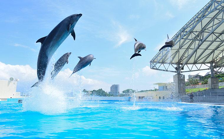 写真提供:国営沖縄記念公園(海洋博公園):オキちゃん劇場